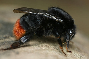 sterven wij ook uit als de bijen uitsterven