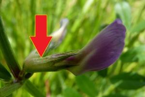 hoe lang blijven bloemen goed